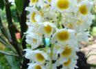 Orkide Yetiştirme İpuçları
