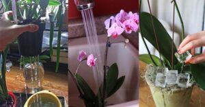 orkide çiçeği neden dökülür