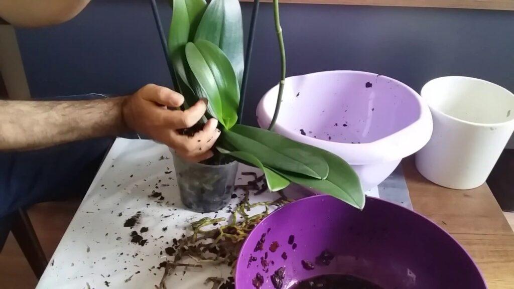 orkide toprak değişimi
