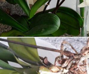 Orkide toprağı nedir