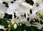 Orkide türleri