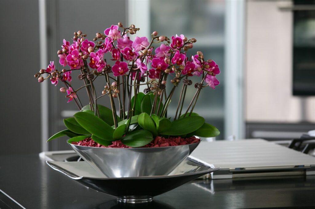 orkide gübresi