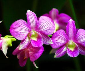 orkide fiyatları hakkında